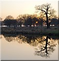 TQ1972 : Sunset at White Ash Pond, Richmond Park : Week 11