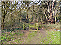 SJ7691 : Entrance to Firs Plantation (Firs Wood) by David Dixon