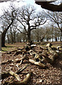TQ2073 : Fallen branches in Barn Wood near Two Storm Wood : Week 12