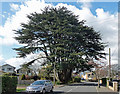 TQ4258 : Cedar, Aperfield Road by Stephen Richards