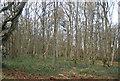 SU8450 : Aldershot Military Training Area by N Chadwick