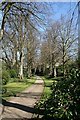 SJ8959 : Lime Avenue at Biddulph Grange Gardens by Graham Hogg