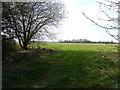 TL0518 : Footpath opposite Millfield Farm by Rob Farrow