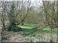 TL0617 : Woodland off Caddington Common by Rob Farrow