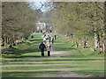 SJ7486 : Avenue through parkland at Dunham Massey by Bryan Pready