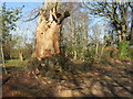 NT4464 : Damaged tree at Keith View by M J Richardson