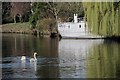TQ6849 : Swan on the River Medway by Oast House Archive