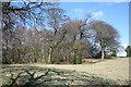 SJ5156 : Woodland on Willow Hill, Burwardsley by Espresso Addict