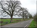 SE4142 : Trees lining Thorner Road by Christine Johnstone