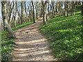 SY1387 : Path ascending Salcombe Hill by Philip Halling