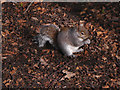 SD8204 : Squirrel at Heaton Park (3) by David Dixon