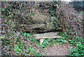 TQ8309 : Sandstone outcrop, Ecclesbourne Glen by N Chadwick