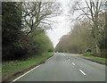 SJ5868 : A49 approaching Abbots Moss Nursery entrance by John Firth