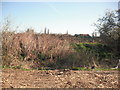 TQ3686 : Dried piece of grassland at the side of the allotment near Leyton Marshes by P Kavanagh