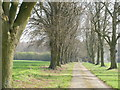 SU9592 : Tree-lined avenue leading to Amersham Road by Peter