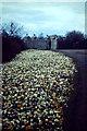NJ9304 : Crocuses, Duthie Park by Colin Smith