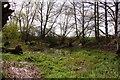 SP6214 : The small pond at Boarstall by Steve Daniels
