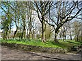 SD8203 : Springtime trees in Heaton Park by Christine Johnstone