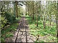 SD8303 : Tramway passing through woodland, Heaton Park by Christine Johnstone