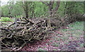 TQ4792 : Woodland Fence by Roger Jones