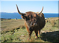 NG6954 : Highland cattle at Kalnakill by Bob Jones
