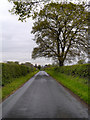 SJ7483 : Rostherne, New Road by David Dixon
