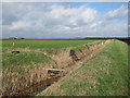TL6690 : Ditch across Feltwell Anchor by Hugh Venables