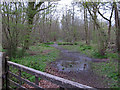 TM1830 : Looking into Stour Wood by Roger Jones