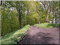 SD7605 : Path through Ringley Woods by David Dixon
