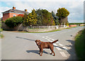 SJ3224 : Dog in Woolston by Des Blenkinsopp