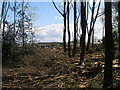 SE2306 : Forestry work near Gunthwaite Hall by John Slater