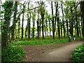 SJ7371 : Footpath at the northern end of Shakerley Mere by Christine Johnstone