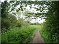 SP1684 : Footpath alongside Hatchford Brook by Christine Johnstone