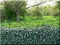 SK6202 : The Arboretum on Shady Lane by Mat Fascione