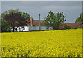 SE7578 : Oilseed rape crop near White House Farm by Pauline Eccles
