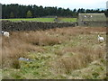 SK2770 : Sheep and barn on Gibbet Moor by Peter Barr