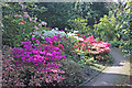 SJ8490 : Old Parsonage Gardens - Azalea corner by Peter Turner