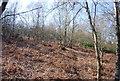 TQ4727 : Bracken, Ashdown Forest by N Chadwick