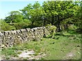 SK0450 : Drystone wall in Swineholes Wood by Christine Johnstone
