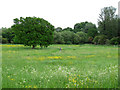 TQ2848 : Meadow adjacent to Prince's Road by Stephen Craven