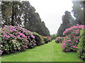 SP9911 : Wellingtonia Avenue with Rhododendrons, Ashridge House by Chris Reynolds