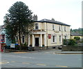 SO0428 : The Puzzle Tree and a monkey puzzle tree, Brecon by John Grayson