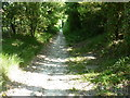 TQ4602 : Tree lined bridleway along Poverty Bottom by Dave Spicer