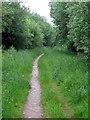 SP7241 : Bridleway through Wicken Wood by Philip Jeffrey