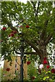 TQ3081 : Street lamp entwined with roses, Gray's Inn Gardens by Julian Osley