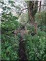 SJ6543 : Camouflaged footbridge by Ian Paterson