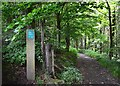 SK2491 : Entrance to Wragg House Plantation, Bradfield Dale by Neil Theasby
