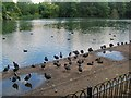 TQ2876 : Small birds by Battersea Park boating lake by Paul Gillett