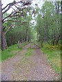 NH2728 : Forest track in Glen Affric by Dave Fergusson