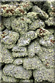 HP6102 : Lichen-covered drystane dyke at Framgord by Mike Pennington
